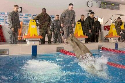 U.S. Soldiers, JGSDF members enhance aquatic confidence with water survival training