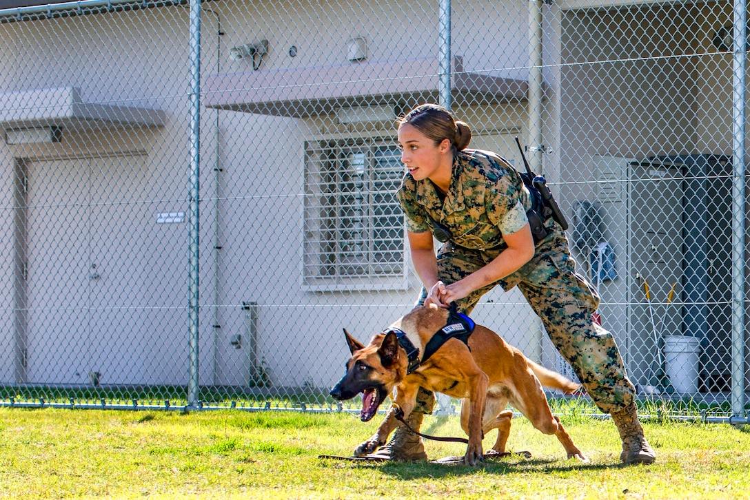 A Marine stands with her legs apart and holds onto a dog that is poised to lunge forward