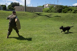 Military working dog Oohio preforms an aggression exercise Aug. 31 at the kennels on Camp Hansen, Okinawa, Japan. The Marine and military working dog are a team. The job of being a handler is always a work in progress. Marines are encouraged to push their limits and learn more when it comes to doing their jobs. They are always learning new techniques and procedures when it comes to performing their job to the best of their abilities.