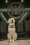 Coby the service dog sits in front of NSA's Memorial Wall.