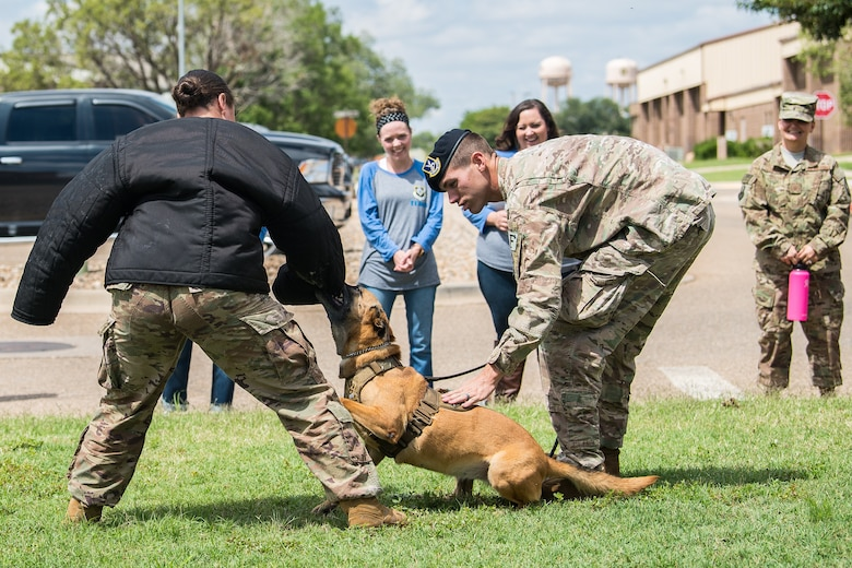 Participants of the Teachers Understanding Deployment Operations observe a military working dog demonstration held by members of the 27th Special Operations Security Forces Squadron at Cannon Air Force Base, N.M., Sept. 8, 2018. The intent of the TUDOS program is to allow teachers a better understanding of how to aid children with deployed parents. (U.S. Air Force photo by Airman 1st Class Vernon R. Walter III/Released)