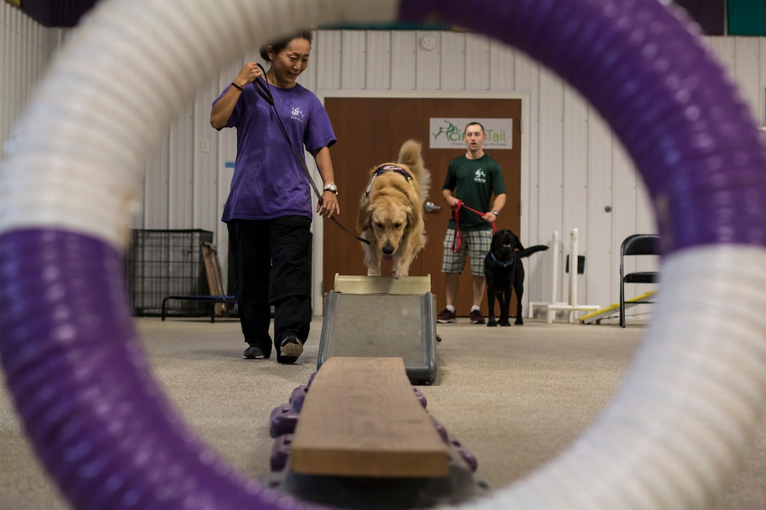 Chiaki Fanelli, a Circle Tail service dog trainer, and Palmer, a Circle Tail service dog, walk through an obstacle course at the indoor training center at Circle Tail, Inc. in Pleasant Plain, Ohio, August 16, 2018.