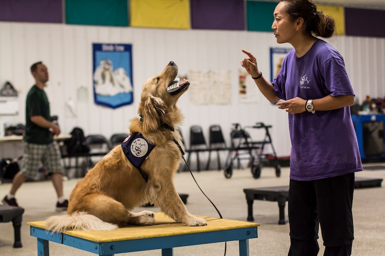 Chiaki Fanelli, a Circle Tail service dog trainer, and Palmer, a Circle Tail service dog, demonstrate the ability to delicately carry a remote control during training at the indoor training center at Circle Tail, Inc. in Pleasant Plain, Ohio, August 16, 2018.