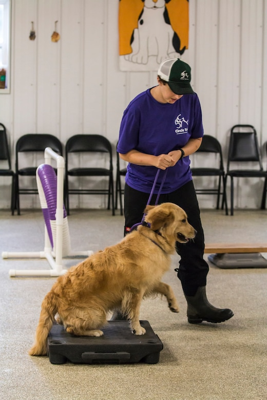 Capt. Emily Cost, Army National Guard and trainer at Circle Tail, Inc., takes Palmer, a future service dog, through the indoor training center obstacle course at Circle Tail, Inc. in Pleasant Plain, Ohio, August 16, 2018. Emily has worked with Circle Tail for almost a decade and now partners with them on a full-time basis.