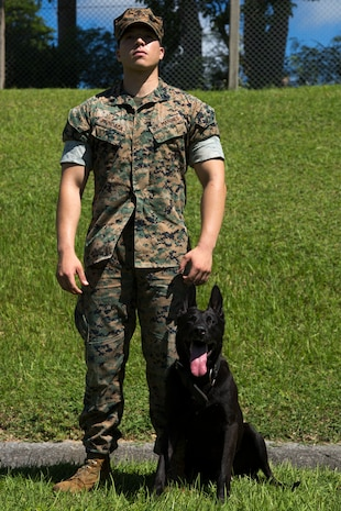 CAMP HANSEN, OKINAWA, Japan – Sgt. David Mundaca and military working dog Oohio pose for a photo Aug. 31 at the kennels on Camp Hansen, Okinawa, Japan. The MWD handlers spend most of their working day with their partner to keep at top performance.