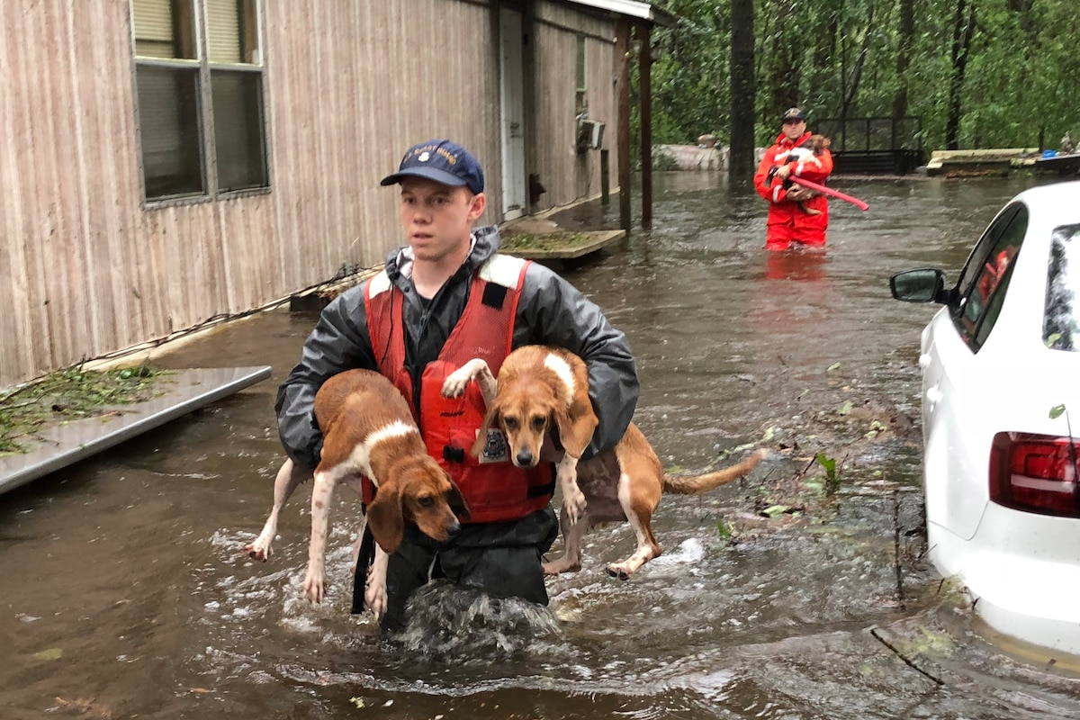 Members of the Coast Guard carry dogs through deep water.