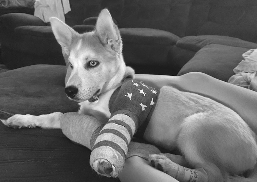 A puppy with a cast on his left front leg rests on a couch.