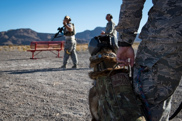 Staff Sgt. Juan Hinojosa, 99th Security Forces Squadron military working dog handler, gives a command to Erik, his military working dog, at Nellis Air Force Base, Nevada, Sept. 19, 2018. The live-fire training allowed the military working dogs to work on their combat familiarization. (U.S. Air Force photo by Airman 1st Class Andrew D. Sarver)