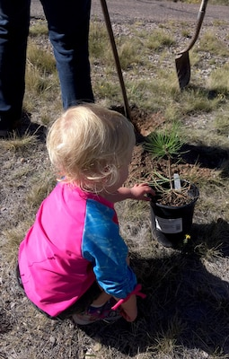 "ABIQUIU LAKE, N.M. -- One of the youngest volunteers ""helps"" plant a tree at the lake, on National Public Lands Day, Sept. 22, 2018."