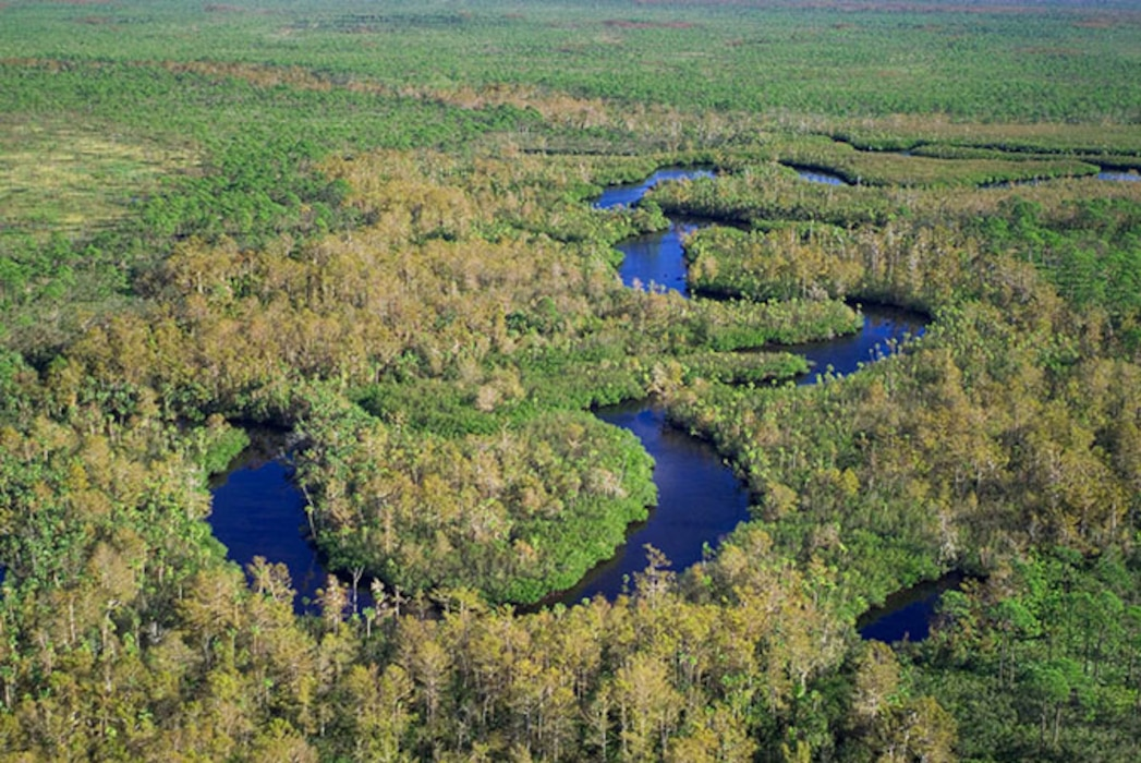 The Loxahatchee River is part of the Northern Estuaries portion of the Everglades Restoration area.