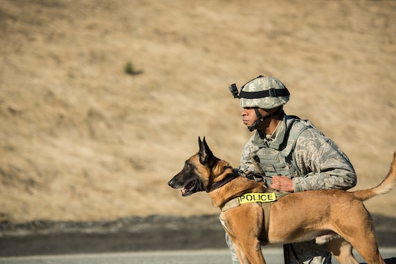 Military working dog, Chicco, awaits command from his handler, U.S. Air Force Staff Sgt. Christopher Bennett, at the Fort Richardson Gate, Joint Base Elemendorf-Richardson, Alaska, April 1, 2019 during a practice e confrontation management scenario for Polar Force 19-4. The simulated protest began as a peaceful demonstration which escalated, resulting in a few aggressive protesters being detained. The exercise test the base's ability to integrate, mobilize, and prepare assigned personnel, aircraft and equipment to handle real-world situations. Bennett and Chicco are both assigned to the 673d Security Forces Squadron.