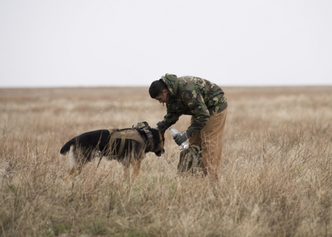 "U.S. Air Force Staff Sgt. Antonio Padilla, 366th Security Forces Squadron military working dog trainer, gives Alf, 366th SFS military working dog, a water break while acting as opposition forces to hunt down ""crashed"" pilots during a combat search and rescue exercise April 2, 2019 at Saylor Creek Range near Mountain Home Air Force Base, Idaho. This is one aspect of the Gunfighter Flag exercise that tests the abilities of pilots to stay hidden until rescue arrives while military working dog trainers and their dogs hone their tracking ability in an expansive environment. (U.S. Air Force photo by Airman First Class Andrew Kobialka)"