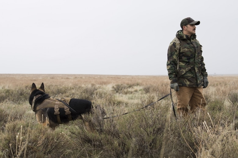 "U.S. Air Force Staff Sgt. Antonio Padilla, 366th Security Forces Squadron military working dog trainer, and Alf, 366th SFS military working dog, act as opposition forces and hunt down ""crashed"" pilots during a combat search and rescue exercise April 2, 2019 at Saylor Creek Range near Mountain Home Air Force Base, Idaho. This is one aspect of the Gunfighter Flag exercise that tests the abilities of pilots to stay hidden until rescue arrives while military working dog trainers and their dogs hone their tracking ability in an expansive environment. (U.S. Air Force photo by Airman First Class Andrew Kobialka)"