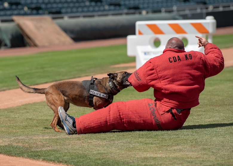 Frida, a Military Working Dog assigned to the 56th Security Forces Squadron, takes down a decoy in the 2019 Desert Dog Trials, April, 6, at Scottsdale Stadium, Scottsdale, Ariz.