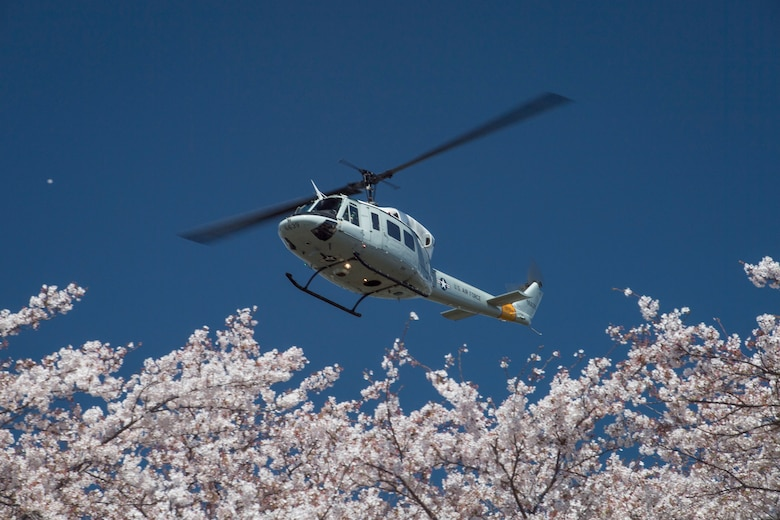 Yokota in full bloom