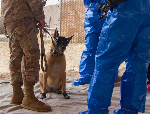 Military working dog, Oopey, a Belgian Malinois who does patrol work and explosive detection, wears protective gear and stands with his handler and members of the 637th Chemical Company in preparation to complete Chemical, Biological, Radiological, or Nuclear (CBRN) decontamination training in Kuwait April 11, 2019. This is the first time Oopey conducted CBRN decontamination training. Members of the 637th Chemical Company, the 719th Medical Detachment Veterinary Service Support, and the 386th Expeditionary Security Forces Squadron came together to conduct a live exercise to train to save the lives of military working dogs and their handlers in the event they were exposed to a CBRN substance. Live training events help prepare service members for real world events which may require them to recall the skills they learned in training to stay in the fight and survive.