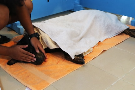 Exercise Palau offers veterinary outreach to Koror