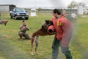Army Capt. volunteers for Military Working Dog demonstration.