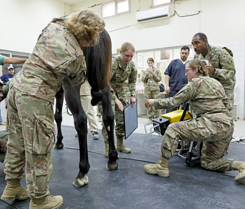 Soldiers from the 64th Brigade Support Battalion, 3rd Armored Brigade Combat Team, 4th Infantry Division help Capt. Theresa Hubbell, middle, a veterinarian with Area Support Group – Kuwait, prepare to take an x-ray on a Kuwait Ministry of Defense horse at the KMOD's Equestrian Center in Kuwait City on April 9, 2019. The BSB is able to provide portable x-ray equipment in order to help Hubbell and the Kuwaiti veterinarians assess the horses.