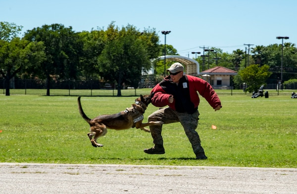 An Airman performs a military working dog demonstration April 20, 2019, at Joint Base San Antonio-Fort Sam Houston, Texas during the Fiesta and Fireworks Extravaganza. Fiesta honors the long-standing partnership between the U.S. military and San Antonio in annual Fiesta events, which commemorate Texas' independence after the Battle of San Jacinto and the Alamo.  (U.S. Air Force photo by Senior Airman Stormy Archer)