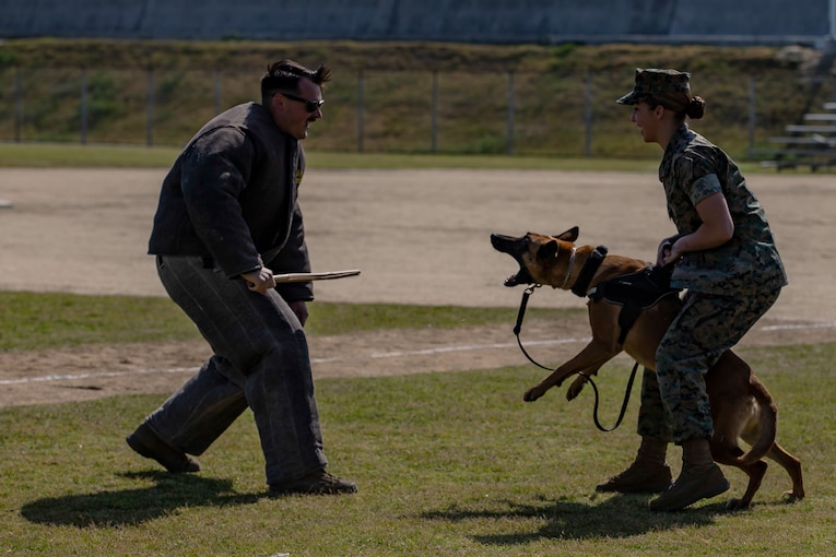 Two Marines perform a demonstration with a dog.