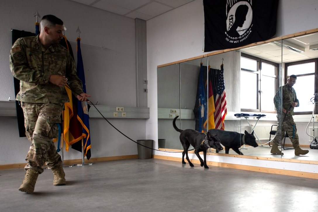 U.S. Air Force Senior Airman Erik Barrera, 52nd Security Forces Squadron military working dog handler, and Ccatilina, an MWD, conduct detection training at Spangdahlem Air Base, Germany, Aug. 1, 2019. Handlers and MWDs learn to communicate with each other to understand when drugs or explosives are present. (U.S. Air Force photo by Airman 1st Class Valerie Seelye)