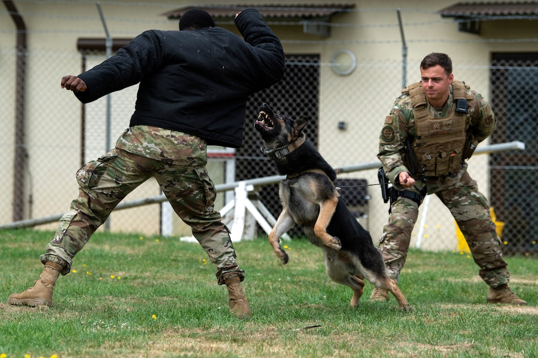 U.S. Air Force Senior Airman Victor Henderson, left, and Staff Sgt. Kyle Strobele, right, 52nd Security Forces Squadron military working dog handlers, conduct training with Mike, an MWD, at Spangdahlem Air Base, Germany, Aug. 1, 2019. Handlers wear protective gear to allow MWDs to practice correctly subduing a suspect with minimal injury to the handler. (U.S. Air Force photo by Airman 1st Class Valerie Seelye)