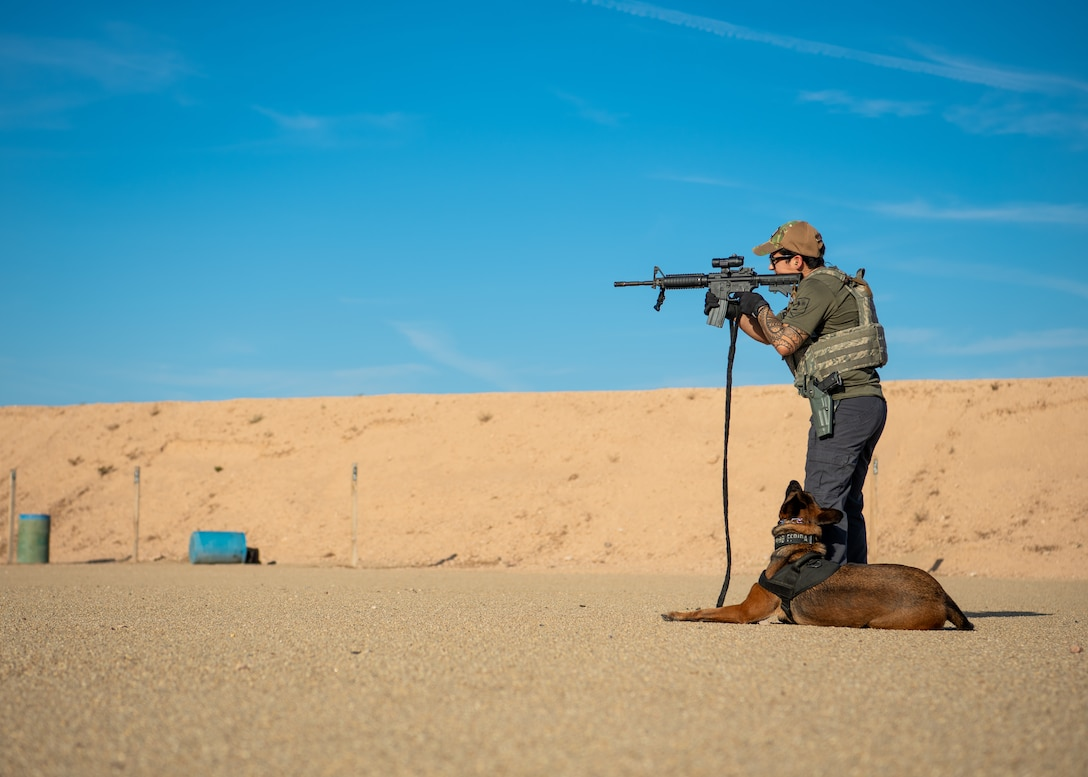 Staff Sgt. Elizabeth Pedroza, 56th Security Forces Squadron military working dog handler, familiarizes Frida, an MWD, with the sound of gun fire Aug. 2, 2019, in Surprise, Ariz.