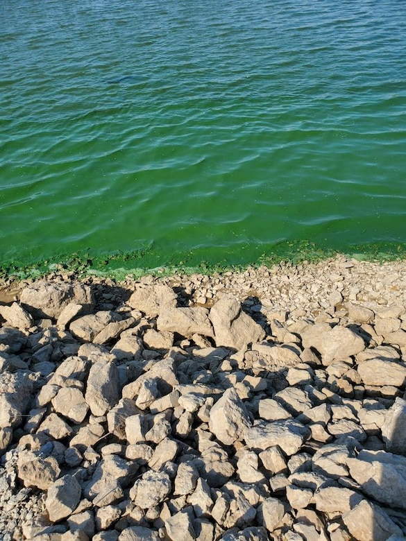 Blue-green algae blooms are unpredictable. They can develop rapidly and may float or drift around the lake, requiring visitors to exercise their best judgment.  If there is scum, a paint-like surface or the water is bright green, avoid all water contact and keep pets away.