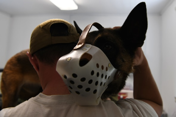 Senior Airman Jonas Benoit, a 28th Security Forces Squadron MWD handler, comforts Anita, a 28th SFS explosive detector dog, during a wellness appointment at the Ellsworth Air Force Base Veterinarian Treatment Facility at Ellsworth AFB, S.D., July 30, 2019. The clinic sees privately owned animals ranging from cats and dogs to guinea pigs and hamsters, and service members and retirees with full benefits can utilize the veterinary clinic. (U.S. Air Force photo by Airman Quentin K. Marx)