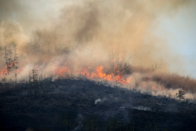 Why are some vegetation fires allowed to burn?
