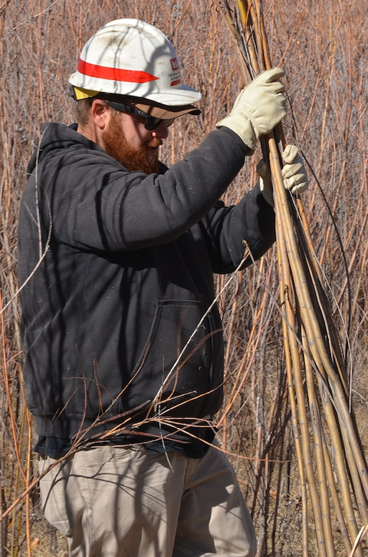 COCHITI LAKE, N.M. - A workshop participant gathers freshly-cut willow poles for transport and replanting during the hands-on riparian construction workshop held February 26-27. The poles were transported to preselected locations, with no vegetation, within the Cochiti Lake area for replanting.