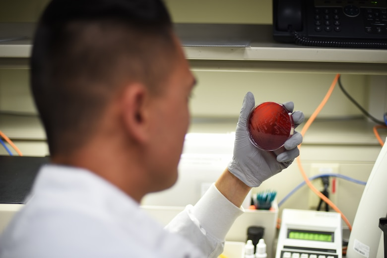Senior Airman Philip Fisketjon, 341st Medical Group medical laboratory technician, examines a Staphylococcus aureus bacteria August 13, 2019, at the laboratory on Malmstrom Air Force Base, Mont.