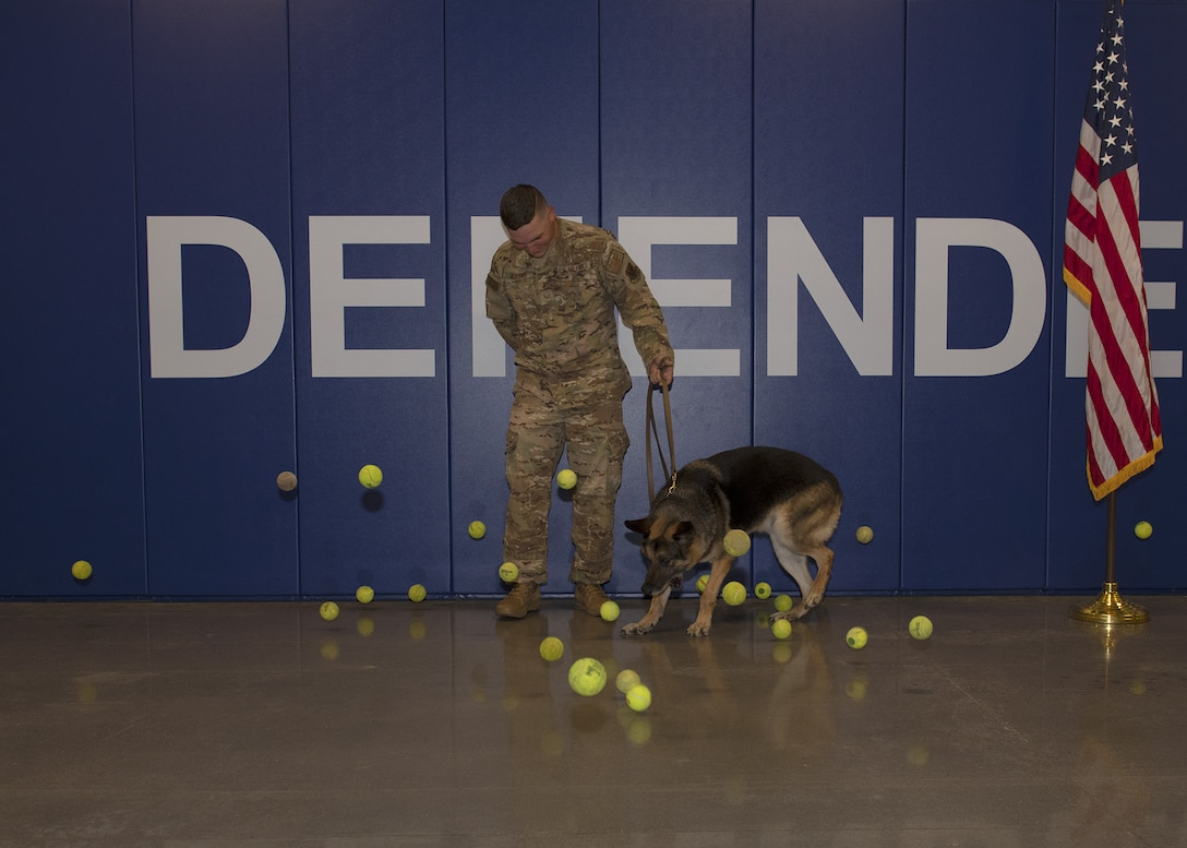 Wax, 56th Security Forces Squadron military working dog, chases after tennis balls during his retirement ceremony Aug. 9, 2019, at Luke Air Force Base, Ariz.