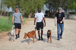 Three U.S. military service members walk dogs at an animal rescue shelter near Doha, Qatar Aug. 9, 2019. They are part of a group from Camp As Sayliyah who regularly volunteer their time to exercise the animals there.