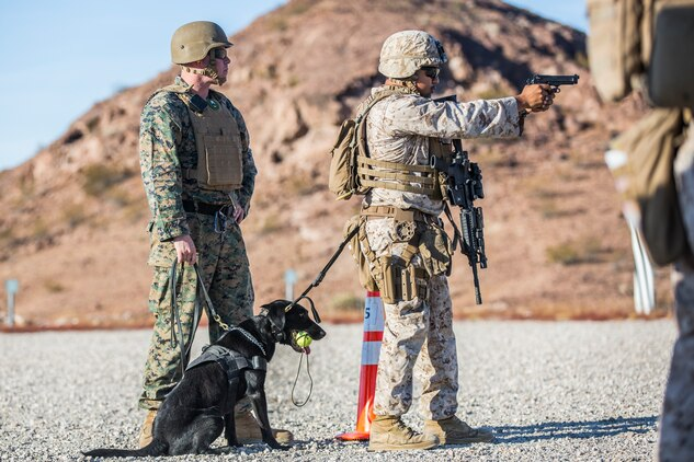 U.S. Marines currently assigned to the Military Working Dog (MWD) Team Deployment Training Course conduct their live fire training exercise with their MWD's on the Graze Range at Yuma Proving Ground (YPG), August 16, 2019. The exercise consists of familiarization and exposing the MWD's to gunfire and a series of drills where handlers proficiently engage targets while maintaining positive control of their MWD's. (U.S. Marine Corps photo by Cpl. Sabrina Candiaflores)
