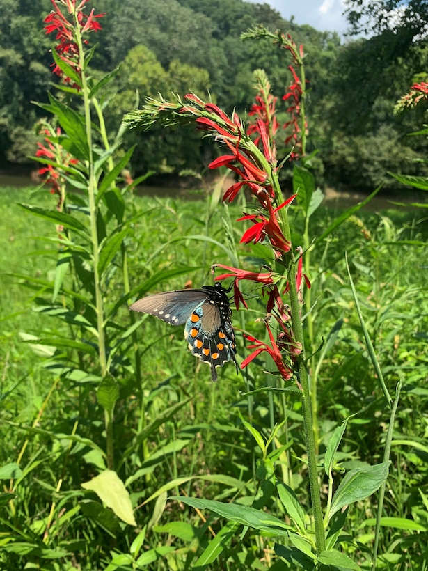 Butterfly at Barren River Lake