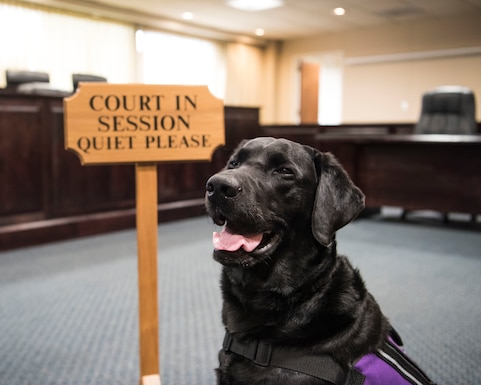 Preston, 30th Space Wing courthouse facility dog, waits for court to begin at Vandenberg Air Force Base, Calif. Dec. 4, 2019. Preston is the only certified courthouse facility dog in the entire Department of Defense; some of Preston's duties include providing support to victims and witnesses while working at the Sexual Assault and Response office at Vandenberg AFB. (U.S. Air Force photo by Airman 1st Class Aubree Milks)