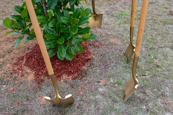 Photo shovels in the dirt around a tree.