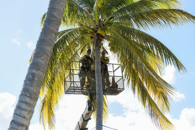 Coconut removal at Muñiz Air National Guard Base