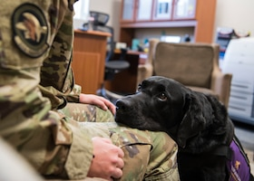 Courthouse facility dog brightens days