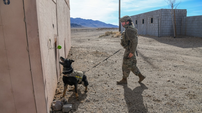 Staff Sgt. Katie McDermott, 99th Security Forces Squadron out of Nellis Air Force Base, Nevada, rewards her partner, Esme, with a chew toy for finding planted narcotics during a joint Military Working Dog training session at the National Training Center on Fort Irwin, California, Dec. 11. The NTC hosted the first-ever event and invited MWD teams from Edwards and Nellis Air Force bases, as well as Marine Corps Logistics Base-Barstow. (Air Force photo by Giancarlo Casem)