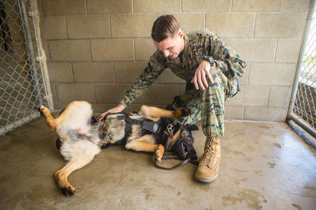 U. S. Marine Corps Cpl. Zachary Devaney, a military working dog handler with the Provost Marshal's Office, Security and Emergency Services Battalion, pets military working dog, Don, at Marine Corps Base Camp Pendleton, California, Dec. 17, 2019 Handlers and their K9, spend over 50 hours training and developing their bond every week.