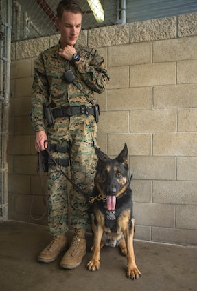 U. S. Marine Corps Cpl. Zachary Devaney, a military working dog handler with the Provost Marshal's Office, Security and Emergency Services Battalion, commands military working dog, Don, to heel for a photo at Marine Corps Base Camp Pendleton, California, Dec. 17, 2019 Handlers and their K9, spend over 50 hours training and developing their bond every week.