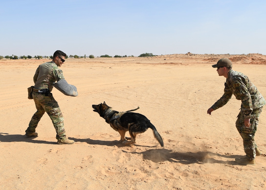 378th Expeditionary Security Forces Squadron military working dog, Robi, demonstrates his capabilities Nov. 27, 2019, at Prince Sultan Air Base, Saudi Arabia.