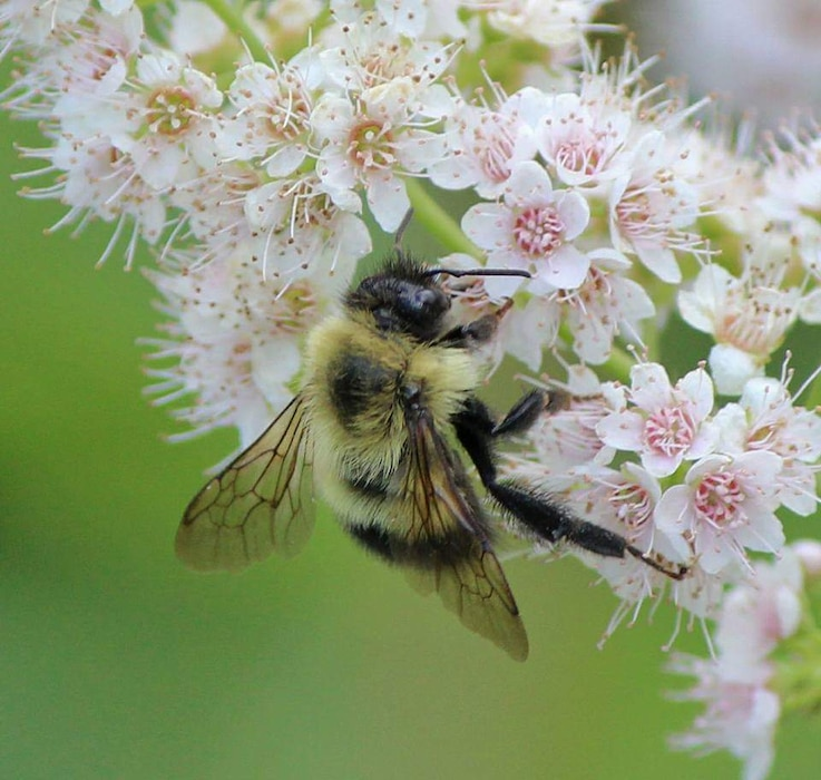 """As a federal land management agency, USACE was asked to """"incorporate conservation practices for pollinator habitat improvement."""" Francis E. Walter Dam has embraced this practice in various locations throughout the project area."""