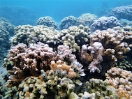 """""""Ever wonder if corals are pretty rocks or living organisms? Corals are minute marine animals living in rock-like skeletons made from calcium. These unique creatures are in serious peril."""""""