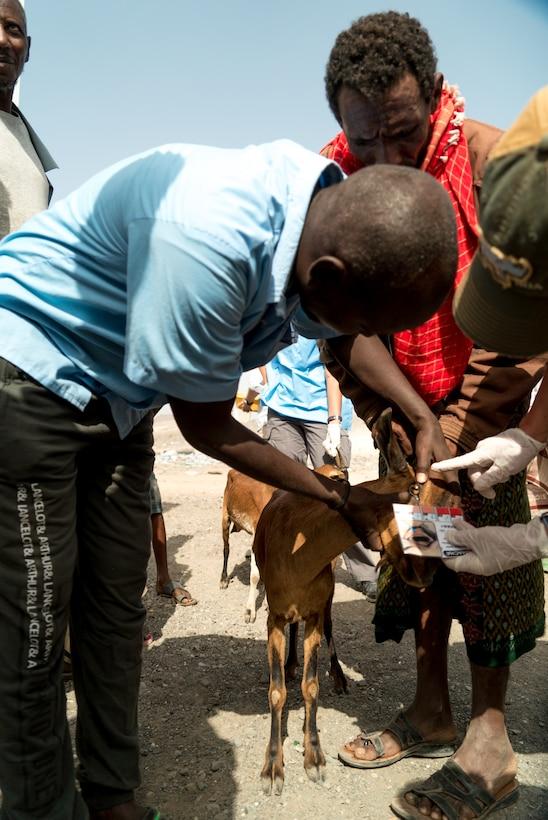 Veterinarians Promote Livestock Health In Rural Djibouti