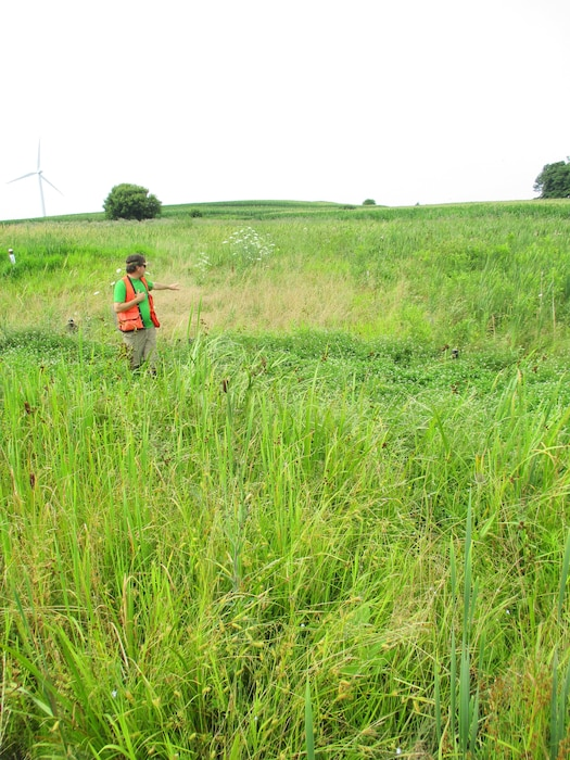 A Buffalo District Regulatory Project Manager assesses a created wetland, which was required mitigation associated with a permit.