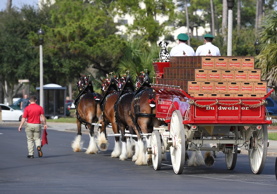 The Budweiser Clydesdales parade down Larcher Blvd. at Keesler Air Force Base, Mississippi, Feb. 7, 2019. They made their first appearance in 1933 and have been featured prominently in two presidential inaugurations. The Keesler Base Exchange hosted the event for Airmen and their families to enjoy. (U.S. Air Force photo by Kemberly Groue)
